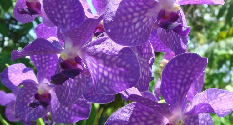 Come fotografare le orchidee