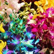 Il fiore dell�orchidea presenta un�incredibile variet� di forme e colori