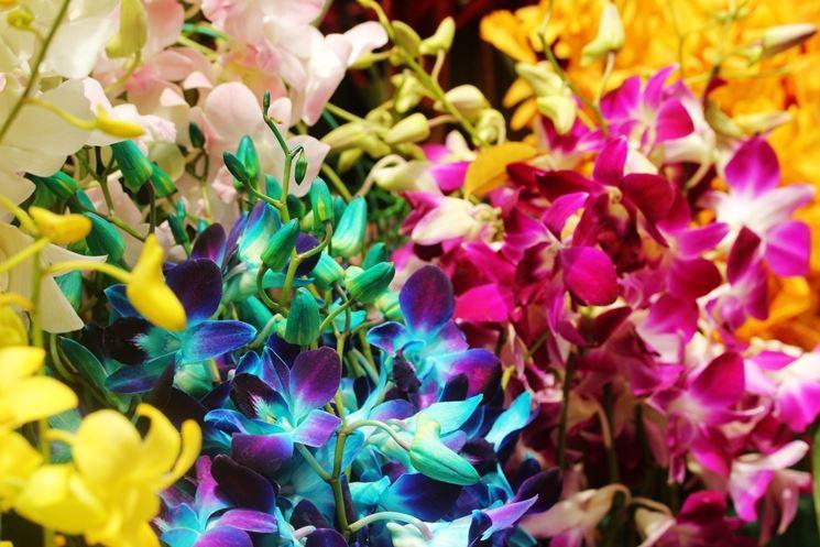 Il fiore dell'orchidea presenta un'incredibile varietà di forme e colori