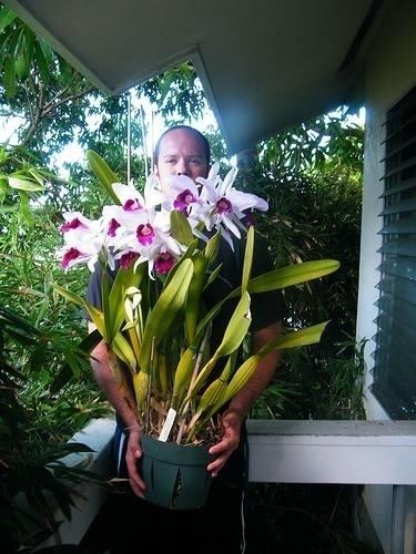 Orchidea cattleya orchidee for Orchidea fioritura