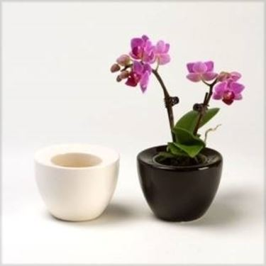 orchidee mini in vaso