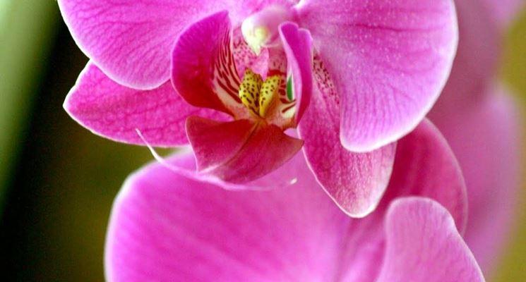 primo piano orchidea