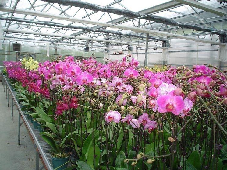 Una grande serra di orchidee