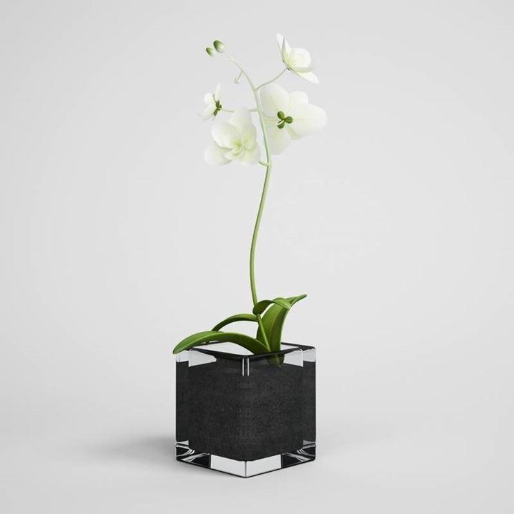 elegante orchidea