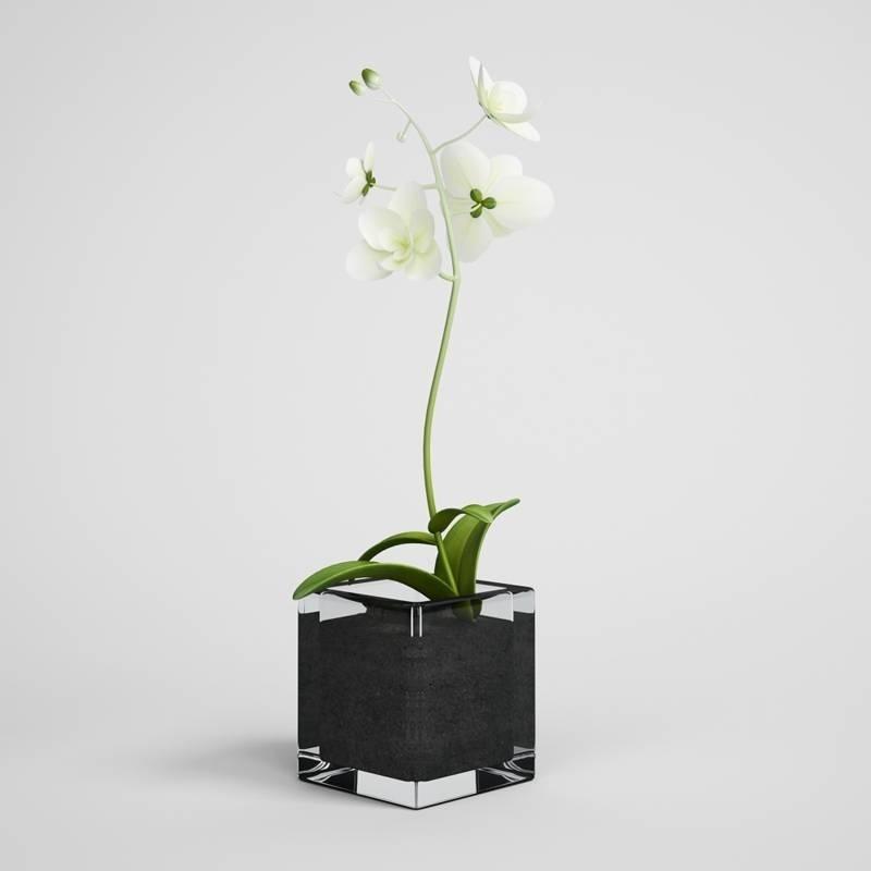 Terriccio per orchidee - Orchidee