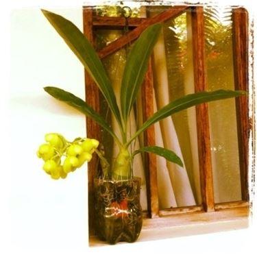 Un'orchidea in una bottiglia di plastica tagliata