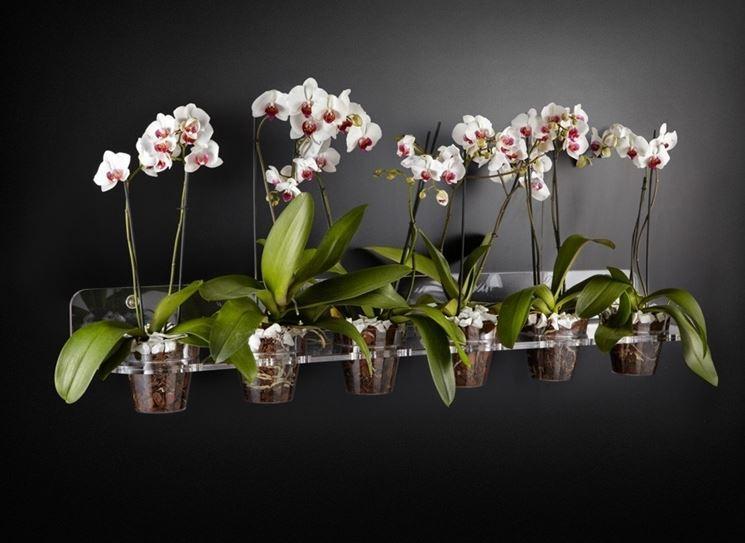 Vasi per orchidee - Orchidee - Orchidee in vaso
