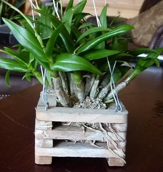 Vasi per orchidee orchidee orchidee in vaso - Vaso in gres per orchidee ...