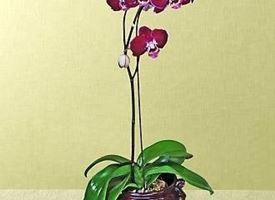 Vaso per orchidea