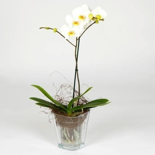 Vaso per orchidea orchidee vaso adatto alle orchidee - Vasi per orchidee ...