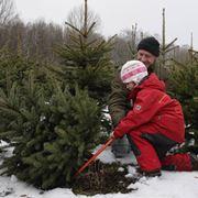Vendita di alberi di Natale veri