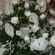 Bouquet Anthurium Bianco