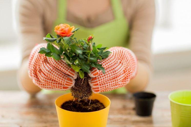 Concimare piante interno