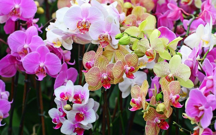 Bellissimi fiori di orchidee di vari tipi