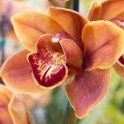 come curare orchidea
