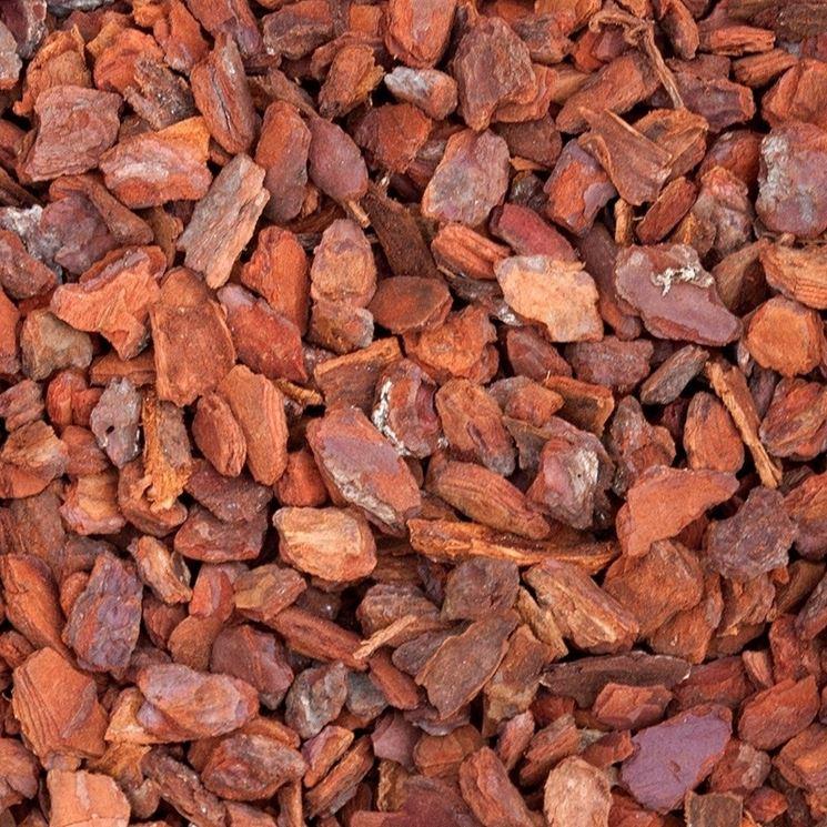 Il bark (corteccia di pino) � il substrato pi� diffuso