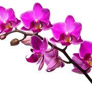 come si curano le orchidee
