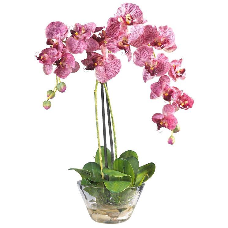 Fiori da appartamento piante appartamento appartamento - Orchidee da appartamento ...