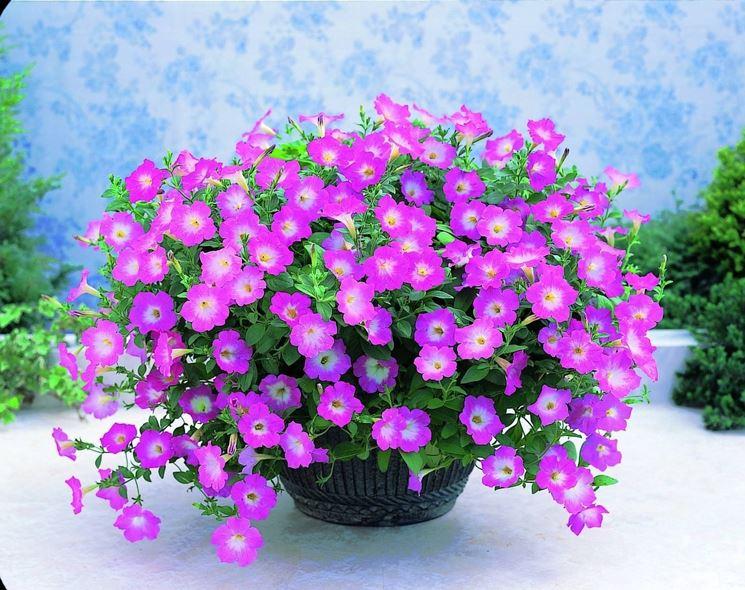 fiori e piante dalla a alla z piante appartamento