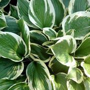 piante da appartamento foglie verdi