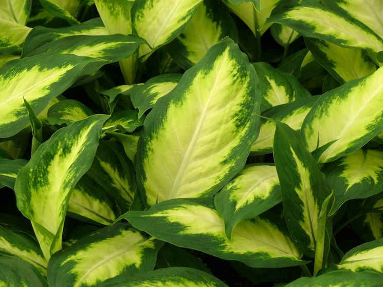 pianta fertilizzata