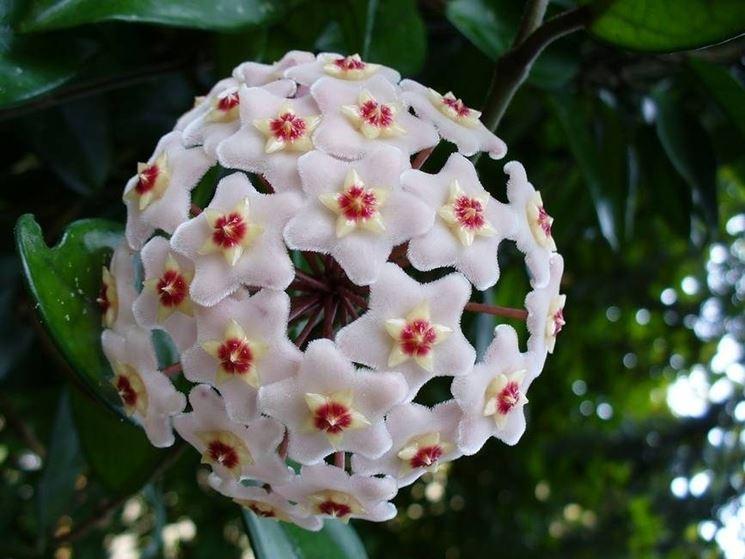 Particolare dei fiori di cera