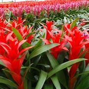 piante classificazioni inferiori successive