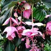 piante tropicali da appartamento