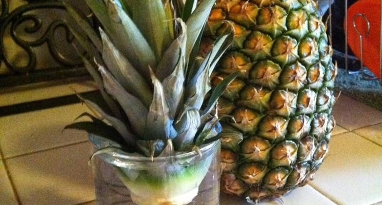 Foglie di ananas posizionate in acqua