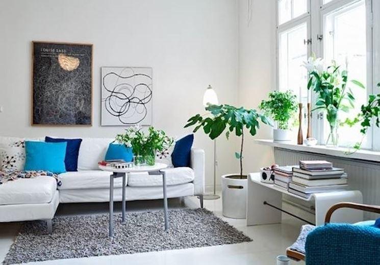 Curare le piante d'appartamento