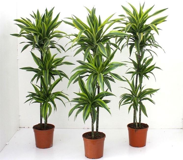 Piante case piante appartamento scegliere le piante for Piante da interno