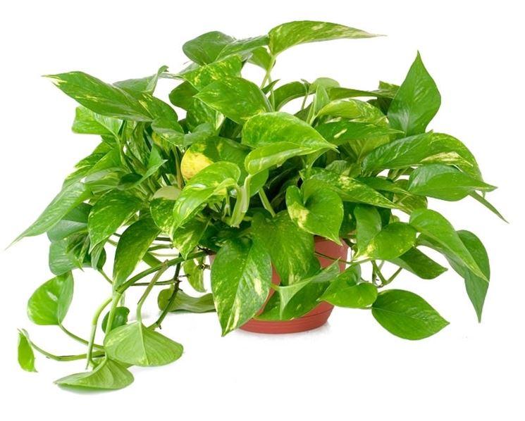 Piante d 39 appartamento piante appartamento pianta interno for Piante appartamento buio