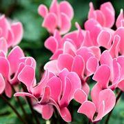 piante da interno con fiori