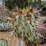 Un esemplare di cactus