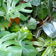 nomi piante