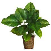 piante appartamento poca luce