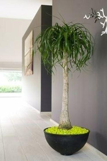 Piante appartamento piante da interno sogno immagine - Vasi ornamentali da interno ...