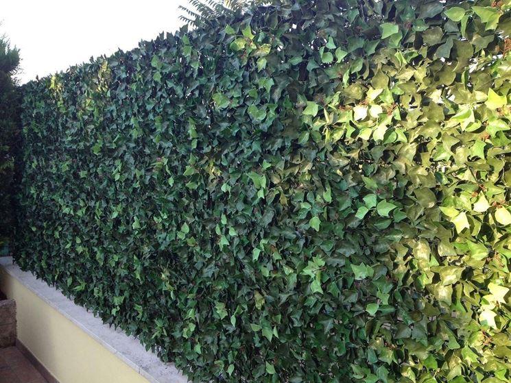 Piante da appartamento sempreverdi piante appartamento piante per appartamento sempreverdi - Siepe in vaso terrazzo ...