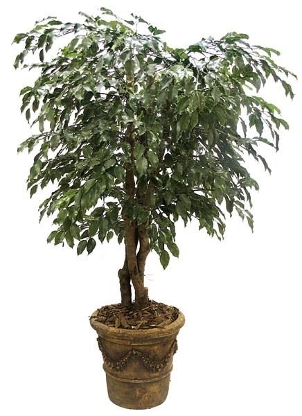 apiante da interno pinate da appartamento : Piante da appartamento - Piante appartamento - Scegliere le piante da ...