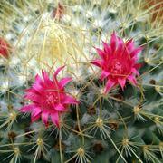 In foto, un esemplare di cactus