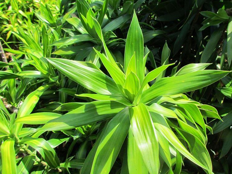 Piante da interni piante appartamento piante da - Porta piante da interno ...