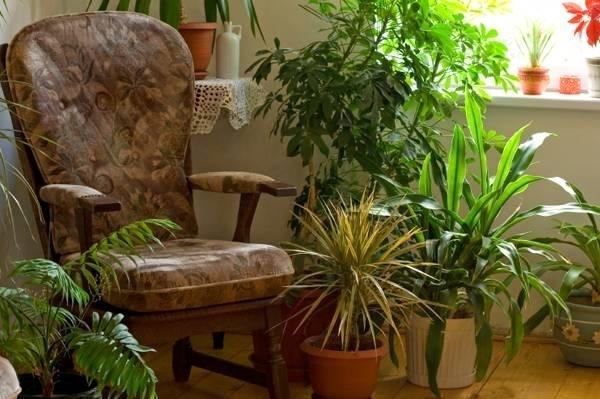 Piante da interno - Piante appartamento - Piante in appartamento