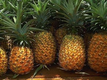 frutti delle piante di ananas