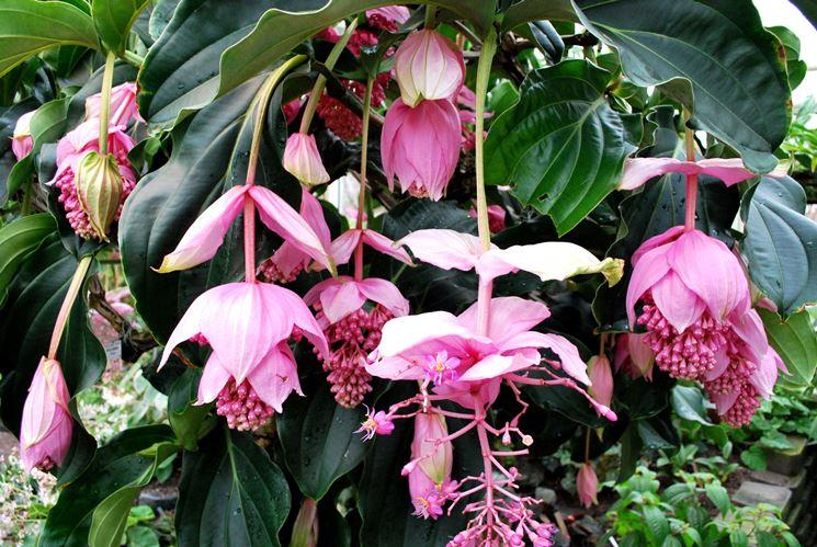piante e fiori dalla a alla z piante appartamento