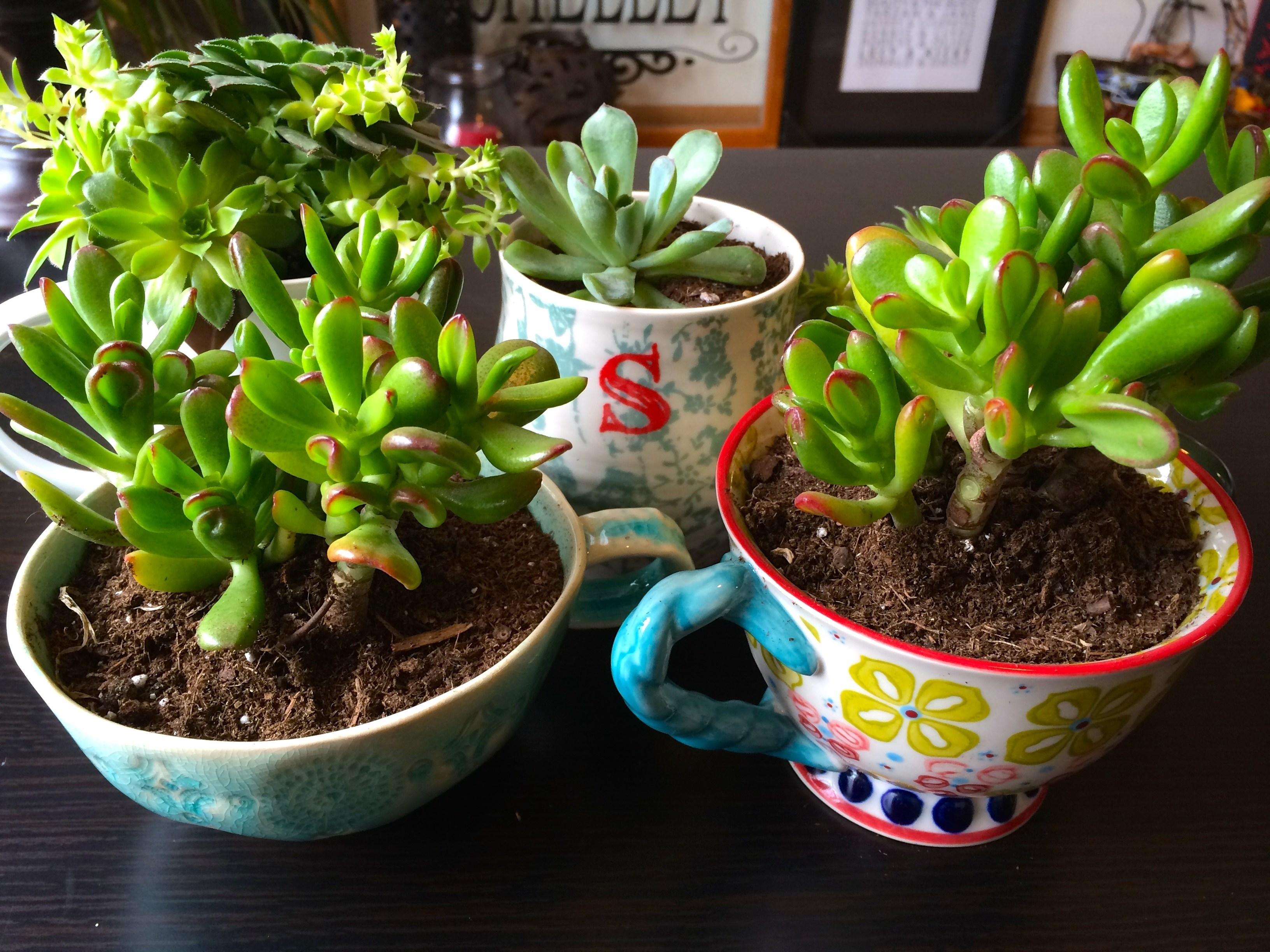 Piante da appartamento semigrasse idea creativa della - Piante fiorite da appartamento ...