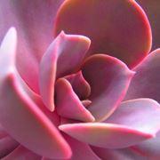 Specie differenti appartenenti alla famiglia dei Cactus
