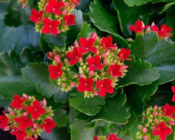 Piante grasse da interno piante appartamento piante - Piante fiorite da appartamento ...