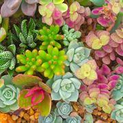 composizione piante grasse da interno