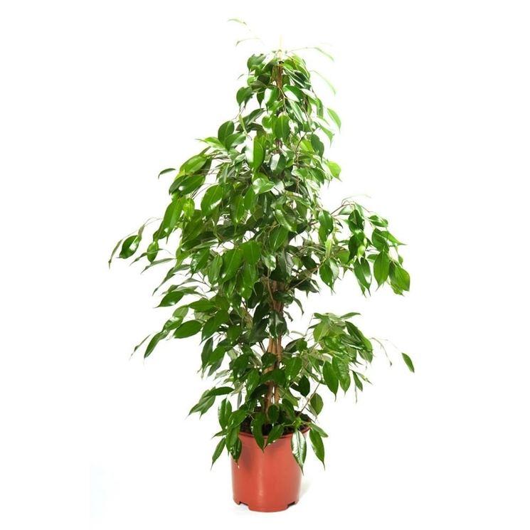 Piante in casa piante appartamento piante da appartamento for Piante in casa