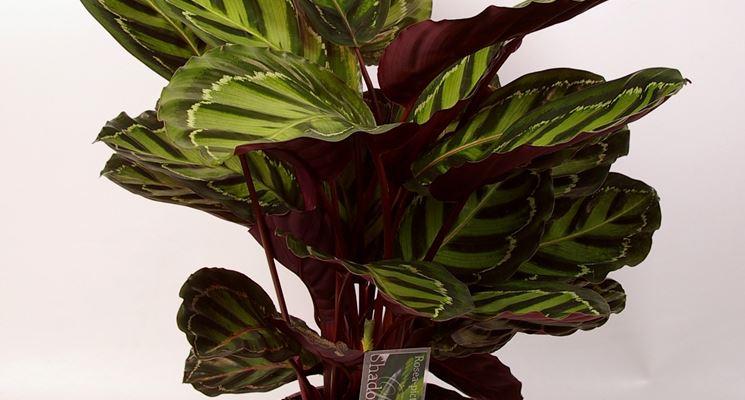 Piante interno piante appartamento piante interno - Piante verdi interno ...